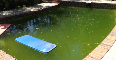 green pool cleaning